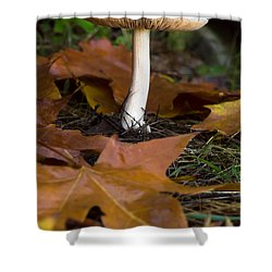 Mushroom, Shower Curtain