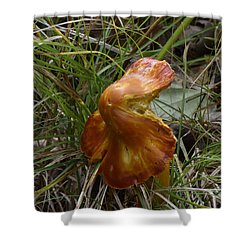 Shower Curtain featuring the photograph Mushroom In Grass by Paul Freidlund