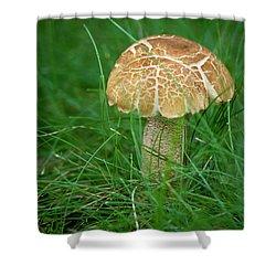 Mushroom In The Grass Shower Curtain by Teresa Mucha