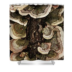Shower Curtain featuring the photograph Mushroom Shells By The Lake Shore by Kim Henderson