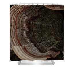 Shower Curtain featuring the photograph Mushroom Shells by Kim Henderson