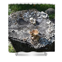 Mushroom Stump Shower Curtain