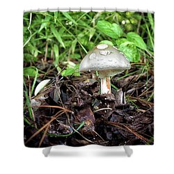 Shower Curtain featuring the photograph Mushroom, Toadstool Or Just A Fun Guy by Bill Swartwout Fine Art Photography