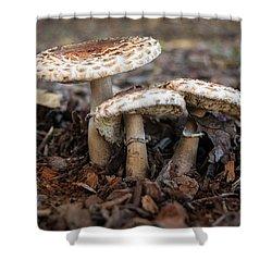 Shower Curtain featuring the photograph Mushroom Trio Macrolepiota Procera by Frank Wilson