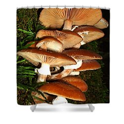 Shower Curtain featuring the photograph Mushrooms 015 by George Bostian