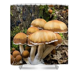 Shower Curtain featuring the photograph Mushrooms - D009959 by Daniel Dempster
