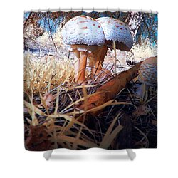 Shower Curtain featuring the photograph Mushrooms In The Grass by Chriss Pagani