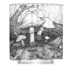 Mushrooms -pencil Study Shower Curtain