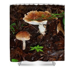 Mushrooms Rising Shower Curtain