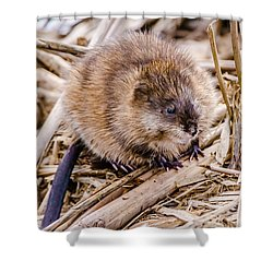Shower Curtain featuring the photograph Muskrat Ball by Steven Santamour