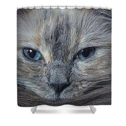 Mustachioed Cat Shower Curtain by Karen Stahlros