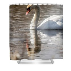 Shower Curtain featuring the photograph Mute Swan - 2 by David Bearden