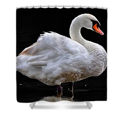 Mute Swan 3 Shower Curtain