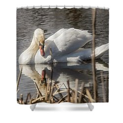Shower Curtain featuring the photograph Mute Swan - 3 by David Bearden