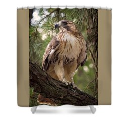 Shower Curtain featuring the photograph My Best Side by Cheri McEachin