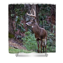 Shower Curtain featuring the photograph My Best Side by Douglas Stucky