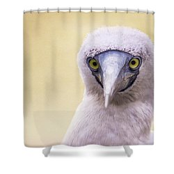 My Booby Buddy Shower Curtain