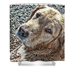 Shower Curtain featuring the photograph My Boy by Rhonda McDougall
