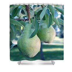 My Brothers Pear Tree Shower Curtain by Wayne Potrafka