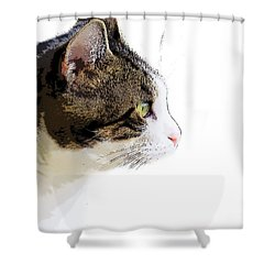 My Cat Shower Curtain