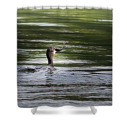 Shower Curtain featuring the photograph Cormorant - My Catch For The Day by Ramabhadran Thirupattur