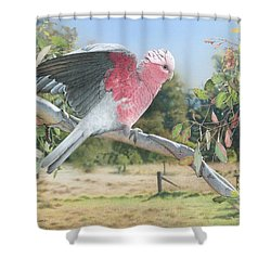 My Country - Galah Shower Curtain