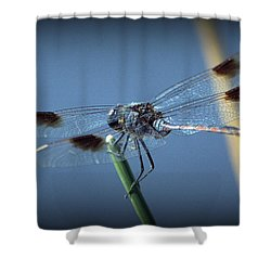 My Favorite Dragonfly Shower Curtain