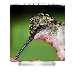 My Hummingbird Shower Curtain by Debbie Green
