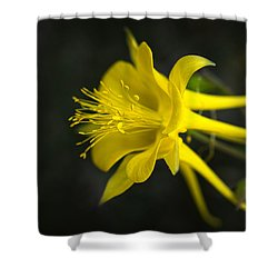 My Love For You Will Last Shower Curtain