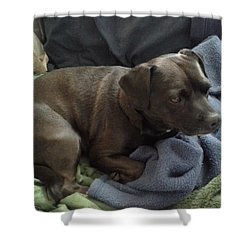 My Puppy Bella Shower Curtain by Jewel Hengen