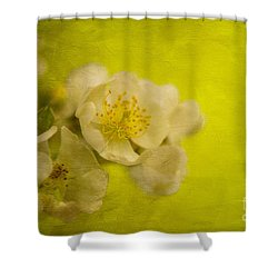 My Sweet Wild Rose Shower Curtain by Lois Bryan