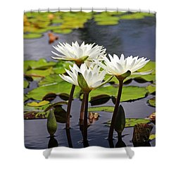 Shower Curtain featuring the photograph My Sweetest Madness by Michiale Schneider