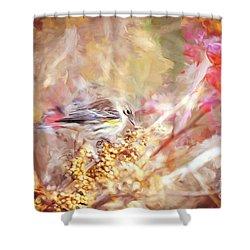 Myrtle Warbler Five Shower Curtain