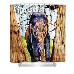 Mysore Shower Curtain by Maria Barry