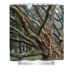 Mysterious Tree Shower Curtain