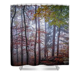 Shower Curtain featuring the photograph Mystery In Fog by Elena Elisseeva
