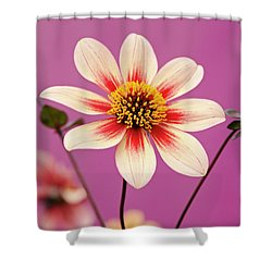 Mystic Dahlia Shower Curtain