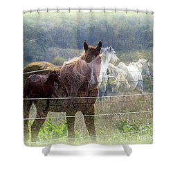 Mystic Horses Shower Curtain