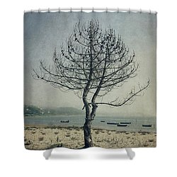 Shower Curtain featuring the photograph Naked Tree by Marco Oliveira