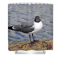 Shower Curtain featuring the photograph Bird by Glenn Gordon