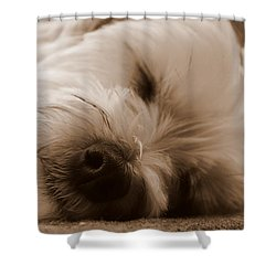 Nap Time Shower Curtain by Ed Smith