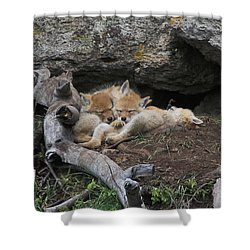 Shower Curtain featuring the photograph Nap Time by Steve Stuller