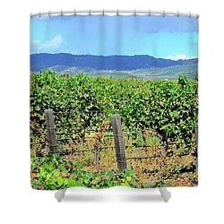 Napa Shower Curtain by Corinne Rhode