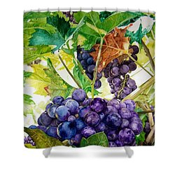 Shower Curtain featuring the painting Napa Harvest by Lance Gebhardt