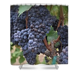 Napa Valley Wine Country Shower Curtain