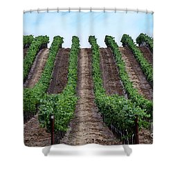 Napa Vineyards Shower Curtain