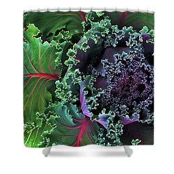 Naples Kale Shower Curtain