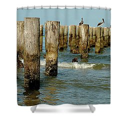 Naples Pier And Pelicans Shower Curtain
