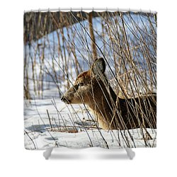 Napping Fawn Shower Curtain by Brook Burling