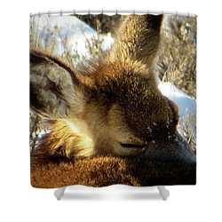 Shower Curtain featuring the photograph Napping Fawn by Karen Shackles